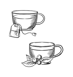 Cup of tea with teabag and cowberry sketches vector image