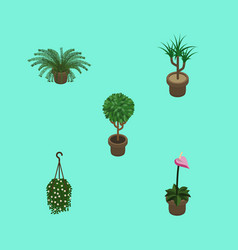 Isometric plant set of plant tree grower and vector