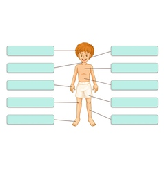 Parts of the body vector