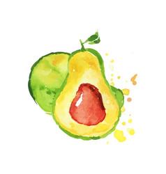 juicy ripe avocado fruit watercolor hand painting vector image