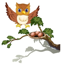 An owl watching eggs at branch a tree vector