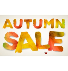 Autumn Sale words made from autumn leaves vector image