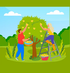 Farmer picking apples from tree vector