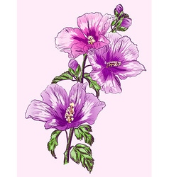 Purple Hibiscus Flower Sketch vector image