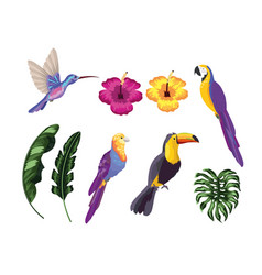 set exotic birds with natural leaves vector image