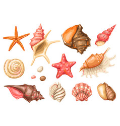 set seashells tropical underwater mollusk vector image