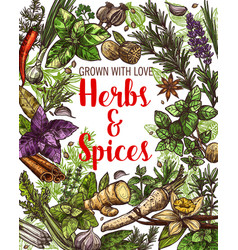 vegetable seasonings spices and herbs sketches vector image