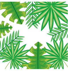 exotic and tropical leafs plants frame vector image