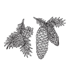 Pine cone and fir tree set vector