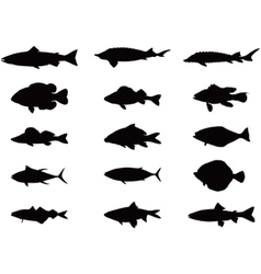 Silhouette of sea and river fish vector