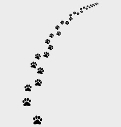 trail of cat 2 vector image vector image