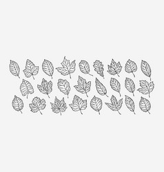 autumn leaves set hand drawn sketch vector image