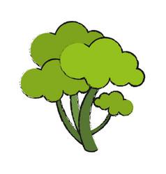 healthy vegetable broccoli vector image