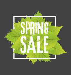 spring sale poster with green leaf banner template vector image