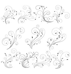thin curly floral lines with delicate leaf vector image