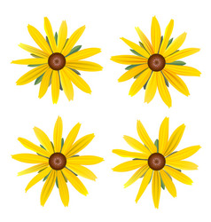 Set isolated buds yellow daisy with leaves vector