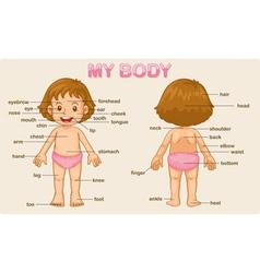 my body vector image