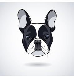 French bulldog head isolated on white background vector image