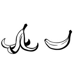 Banana peel cartoon vector
