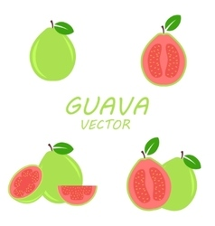 Flat Guava icons set vector