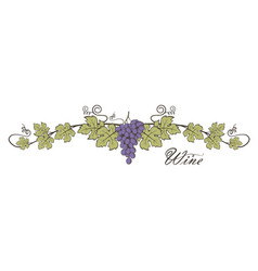 grape bunches image vector image
