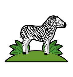 wild zebra in jungle vector image