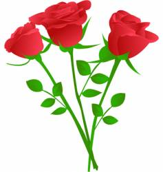 bouquet of three red rose vector image