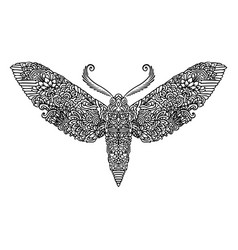 night butterfly adult coloring book vector image