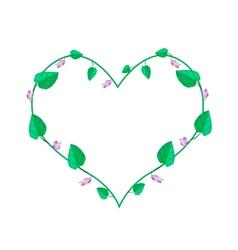 Centrosema Pubescens Plants in A Heart Shape vector