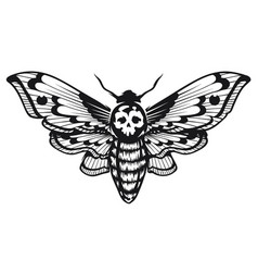 Deaths head hawk moth vector