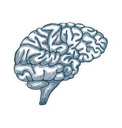 Engraving brain hand drawn vector