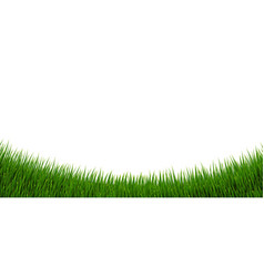 Green grass border and isolated white background vector