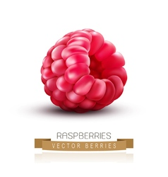 Isolated raspberries on a white background vector