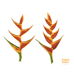 Isolated tropical flowers heliconia vector