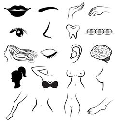 Women body parts human vector image