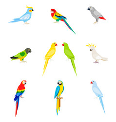 A set of parrots in a flat style vector