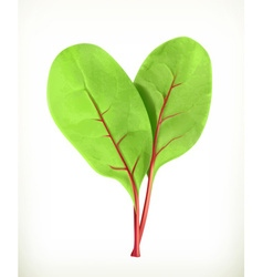 Baby beetroot leaves vector image