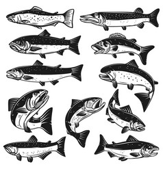 Big set of fish pike salmon trout perch design vector