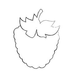 blackberry fresh fruit icon vector image