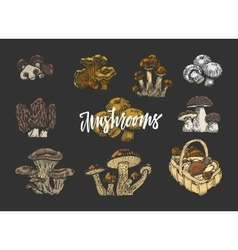 Colored Mushroom Elements Set vector image
