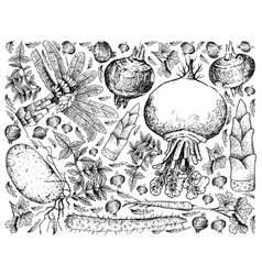 hand drawn of root and tuberous vegetables backgro vector image