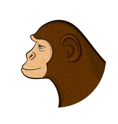 Pencil drawing monkey vector image