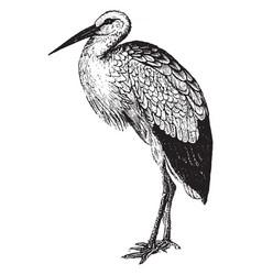 Stork vintage vector