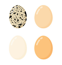 chicken eggs in various shapes and colors vector image
