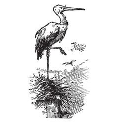 mother stork vintage vector image