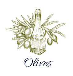 Olives and olive oil bottle sketch vector