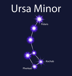 Constellation ursa minor with stars pherkad vector