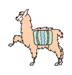 Hand drawn peru animal alpaca vicuna vector