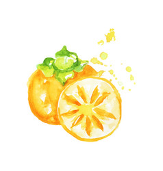 Juicy ripe persimmon fruit watercolor hand vector