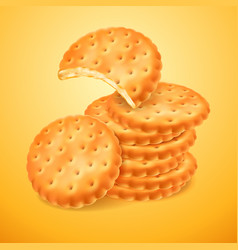 Round delicious cookies or crackers isolated vector